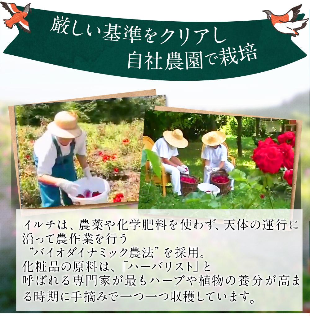 オーガニック栽培している自社農園